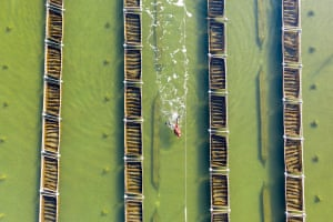 A diver harvests sea cucumbers on a farm near the Luan River in Hebei province