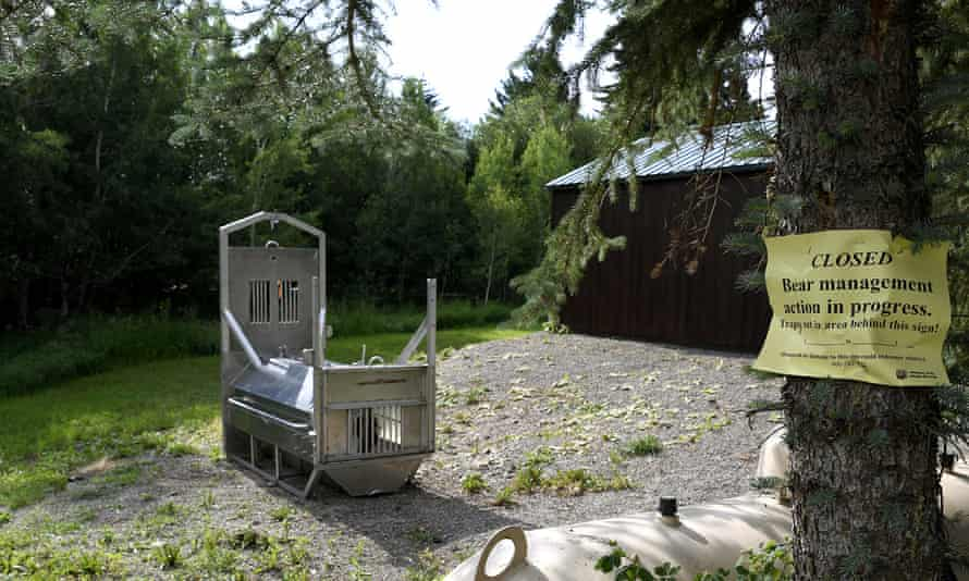 Bear trap set in the camping area where Leah Davis Lokan was killed by a grizzly.