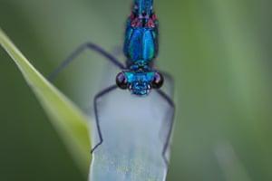 A dragonfly sitting on a plant in Van, Turkey