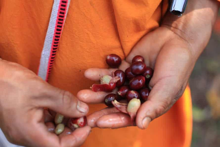 دستهای دالیا که لوبیا قرمز را گرفته است