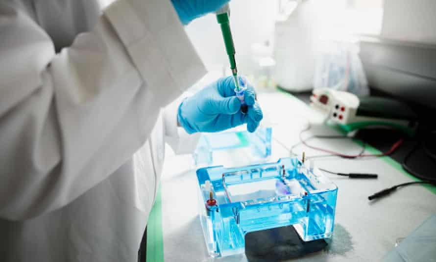 Scientist with pipette loading DNA gels in laboratory