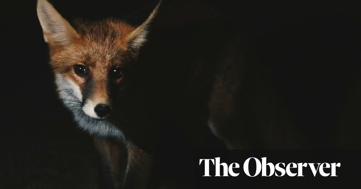 The Wild Fox of Yemen by Threa Almontaser review – darting between two worlds