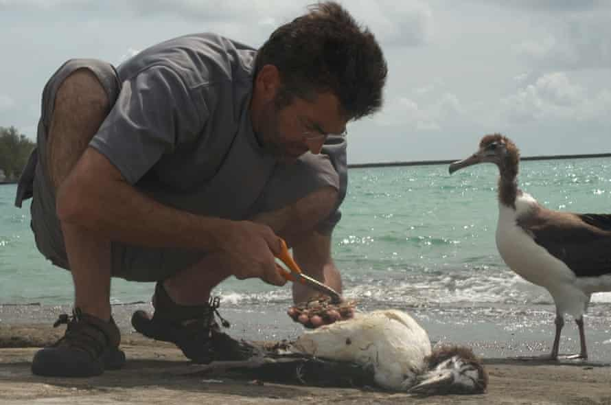 Jordan inspects the plastic ingested by a chick in Albatross.