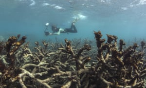 Aftermath of bleaching on the Great Barrier Reef