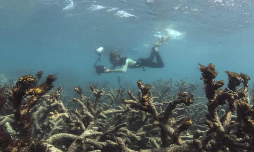 Bleaching at Lizard Island on the Great Barrier Reef