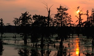 Grisly discoveries in the bayou in Bluebird, Bluebird. Photograph: Alamy
