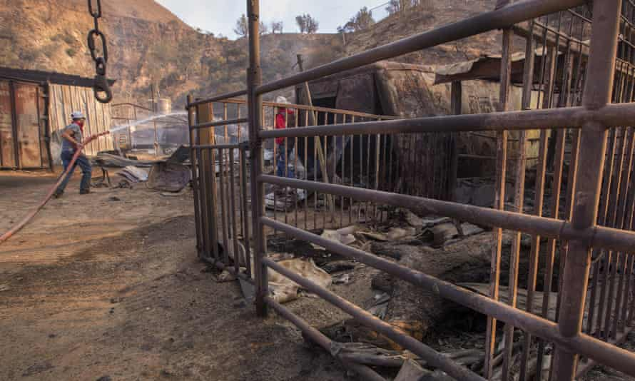 Stalls where some of the 29 horses and numerous other animals died in the Creek fire.