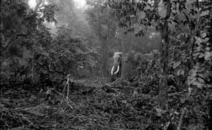 An elephant emerges from the forest
