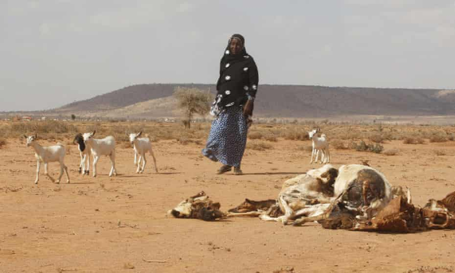 Drought in Somaliland.