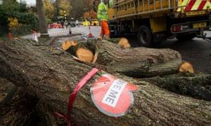 A tree cut down