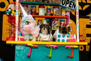 Best in show went to a trio of pooches dressed as a sweets shop