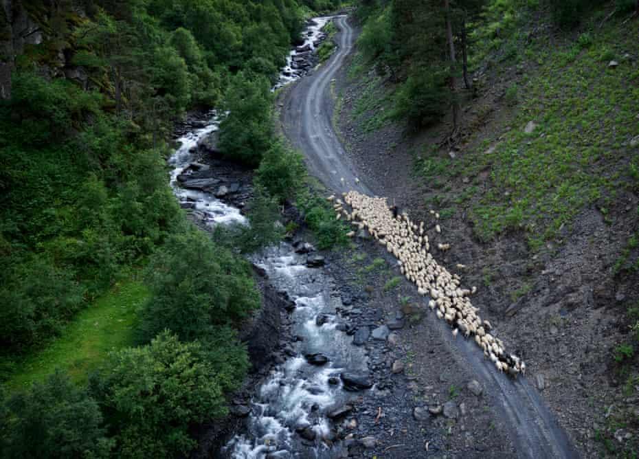 A shepherd leads his flock alongside a river near the village of Khiso.