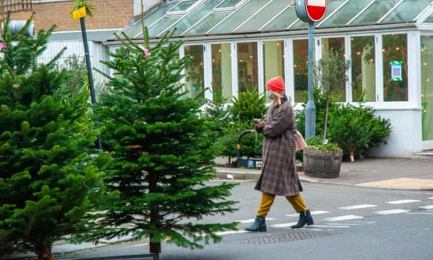 Christmas trees on sale in Battersea, London