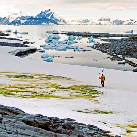 Study author Andrew Gray geotagging the snow algae blooms.