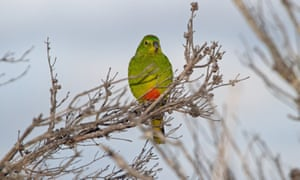 a green and orange parrot in a tree