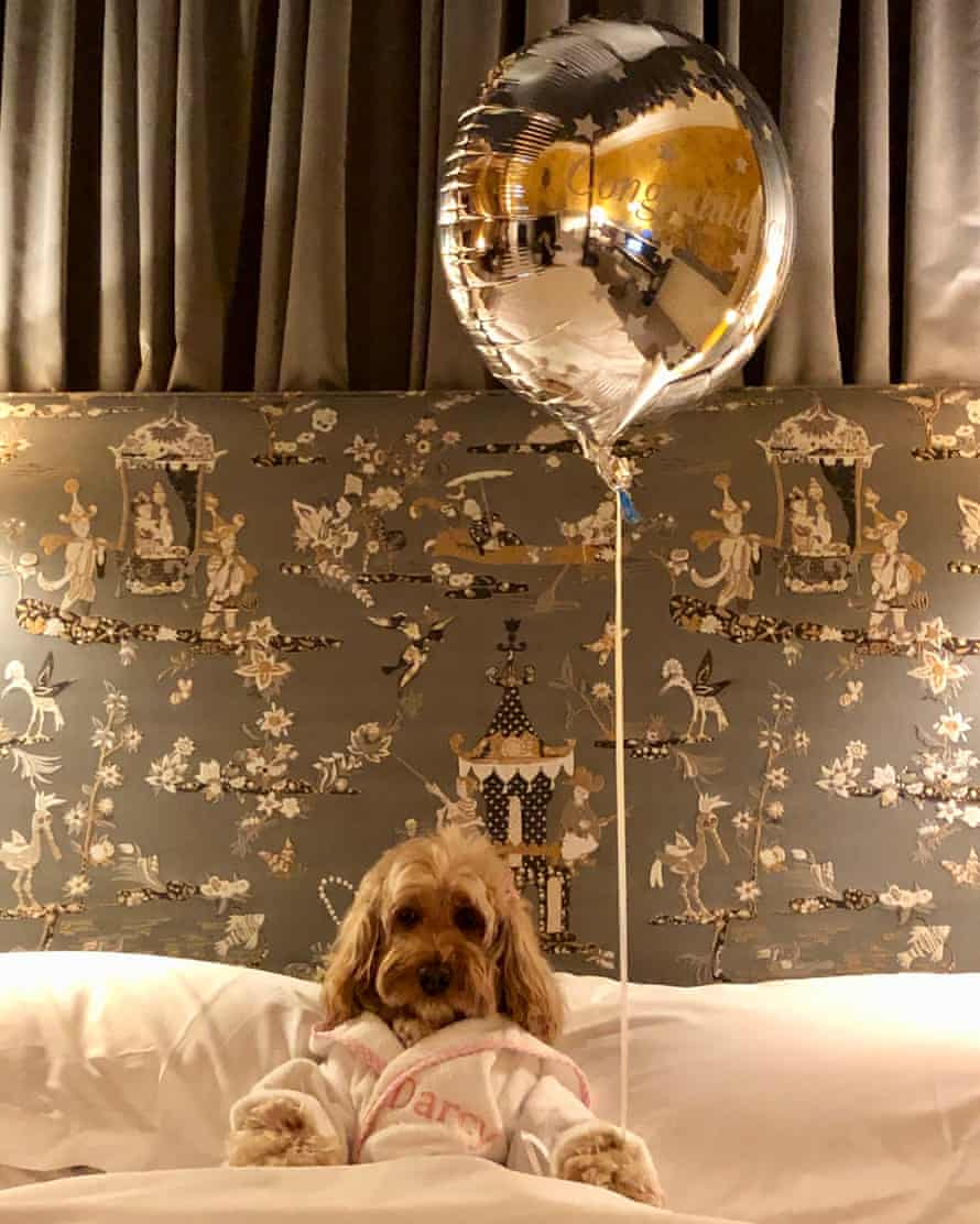 Cockapoo Darcy. She has travelled to more than 20 countries with her owner