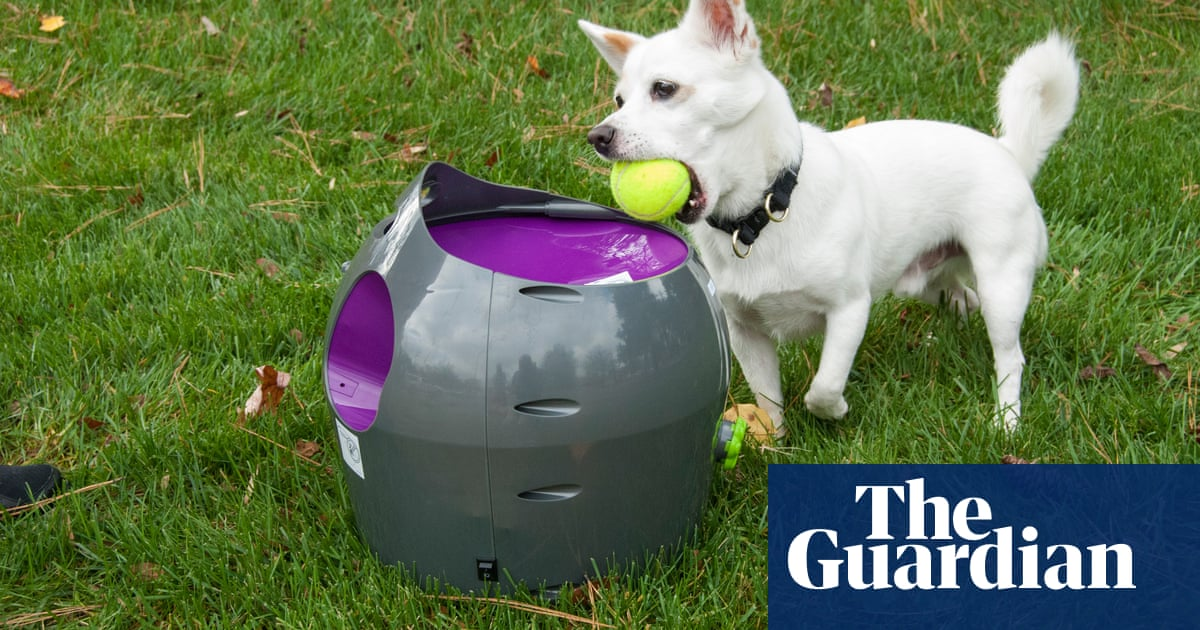 From ball launchers to activity trackers: the new breed of pet tech