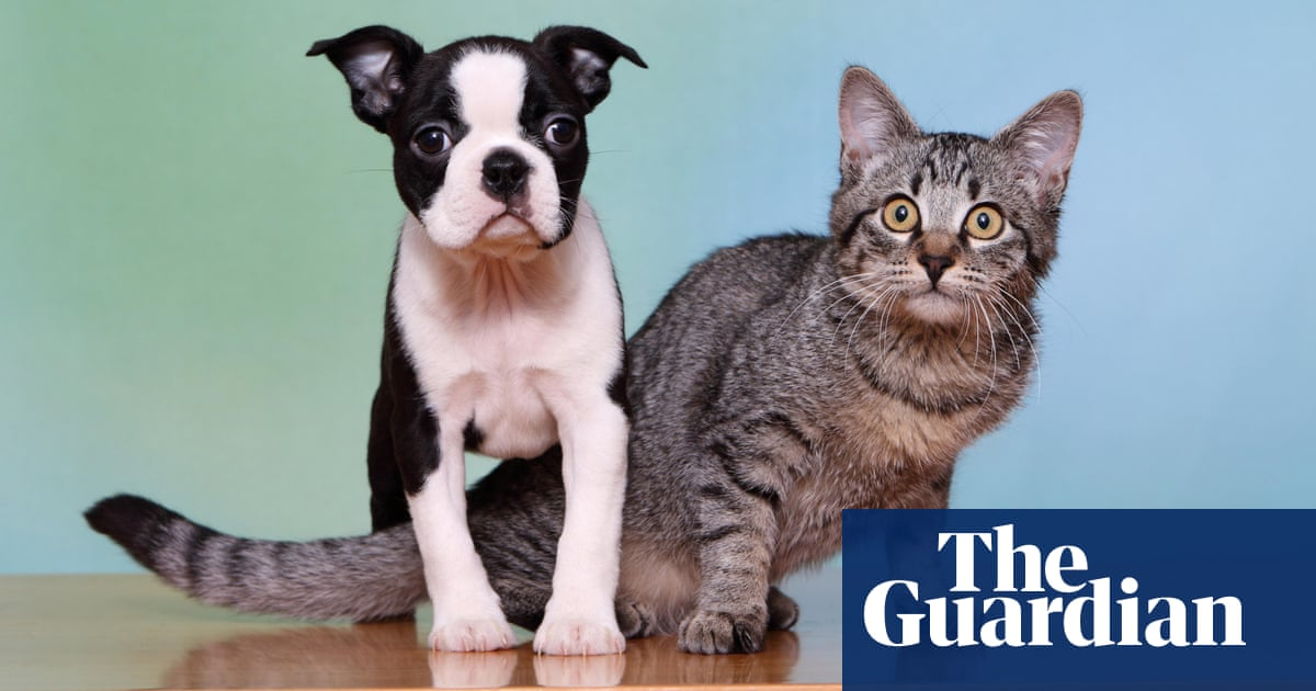 New laws making it easier for Victorian renters to have pets come into force