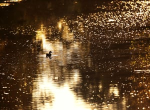 Frankfurt, Germany: A duck takes an early morning swim