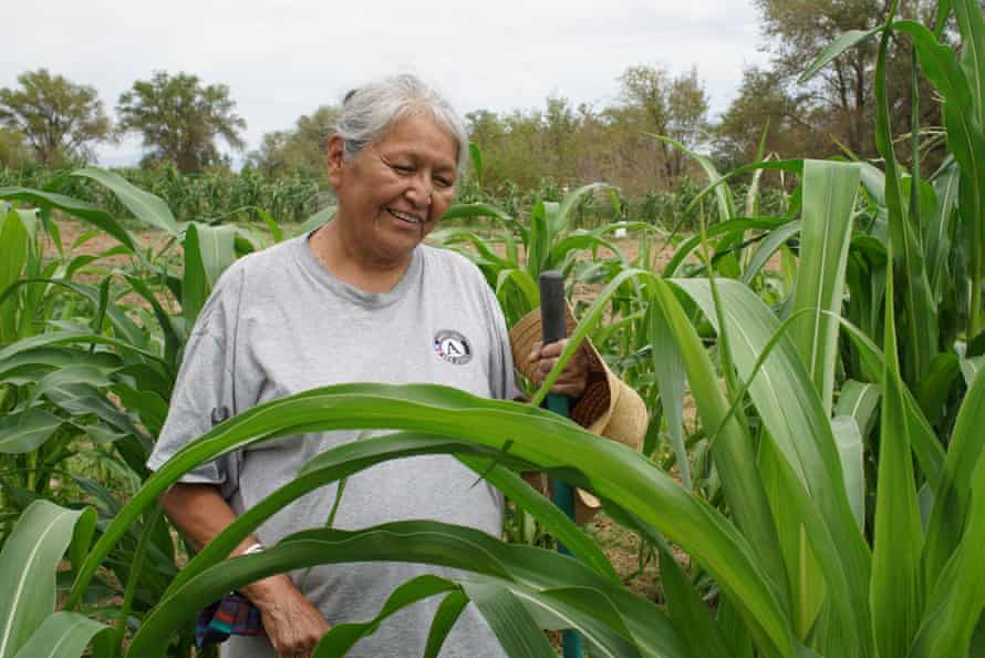 Natalie Tome-Beyale tends to the corn on her Shiprock farmland.