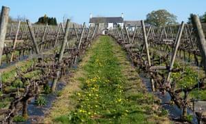 Winning blends: the Llanerch Vineyards.