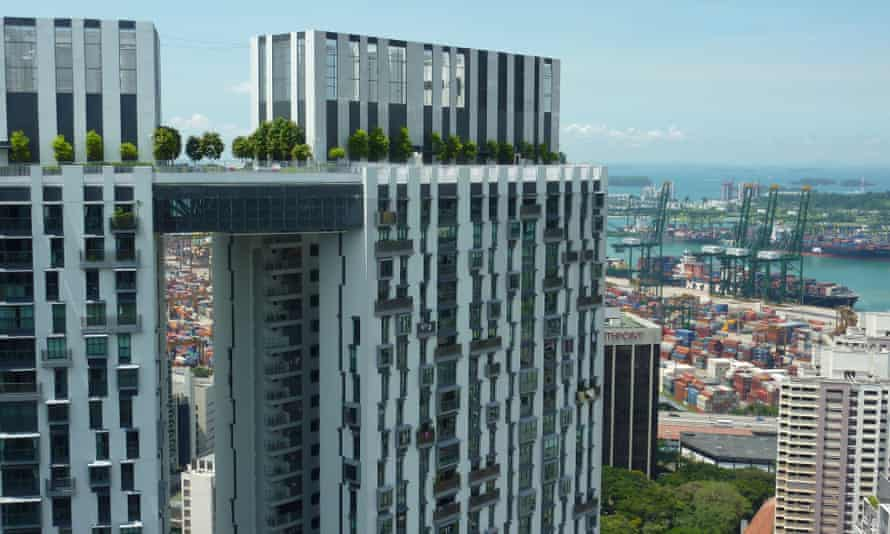 Singapore greenery.