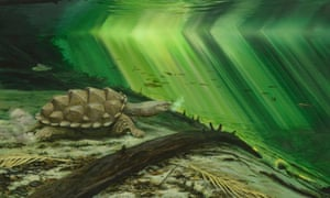 An artist's reconstruction of the fossil turtle Platychelys oberndorferi, rapidly projecting its head forward to capture a fish.