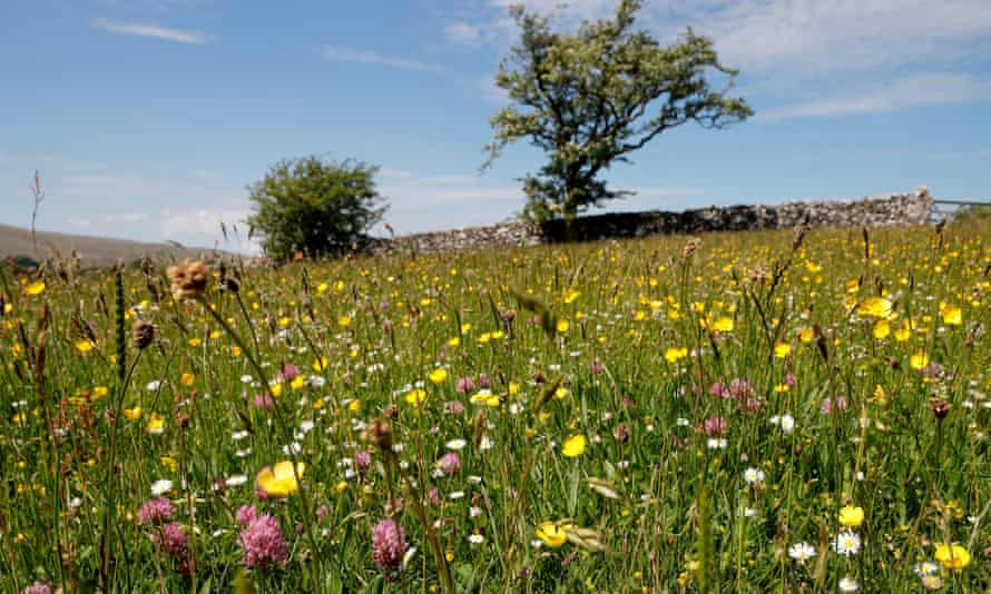 A wildflower meadow at Bowber Head farm in Cumbria, one of the 10 projects aimed at helping nature recover.