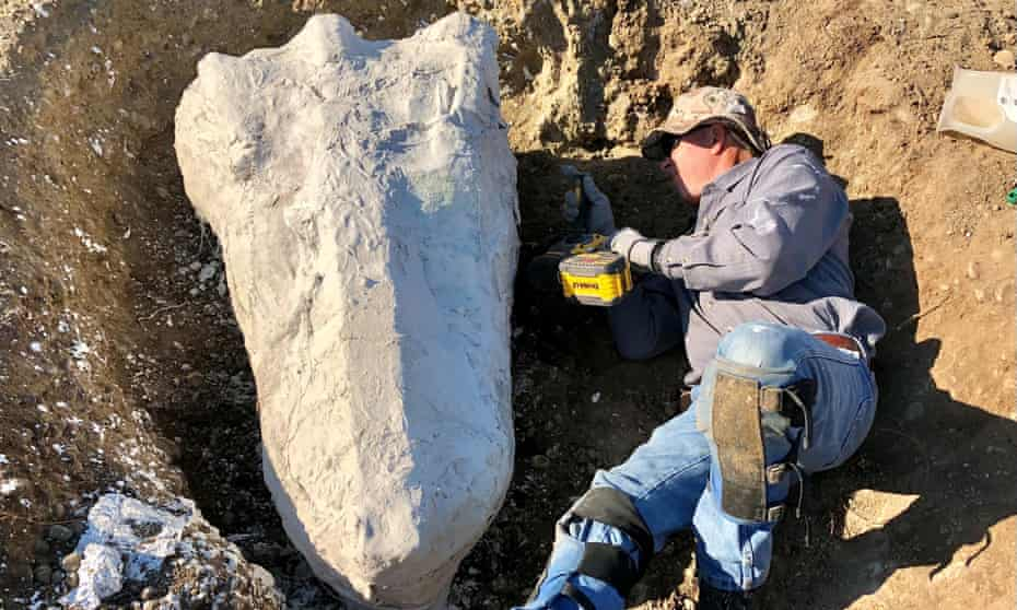 Ranger Greg Francek uncovers a gomphothere fossil.