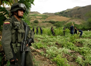 An anti-drugs officer guards workers as they destroy coca-leaf plantations in Nariño province, Colombia.