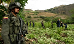 A Colombian anti-drug policeman stands guard in front of workers while they eradicate coca leaf plantations.