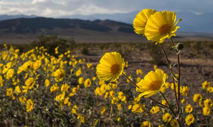 'At first glance you are blown away by the sheer numbers of flowers, then on closer inspection the diversity of species will draw you in,' said Alan Van Valkenburg, a Dark Valley national park ranger.