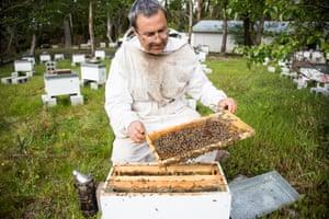 David Yanke, of Daykel Apiaries, checking his hives