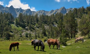 Horses grazing in the mountains of Andorra