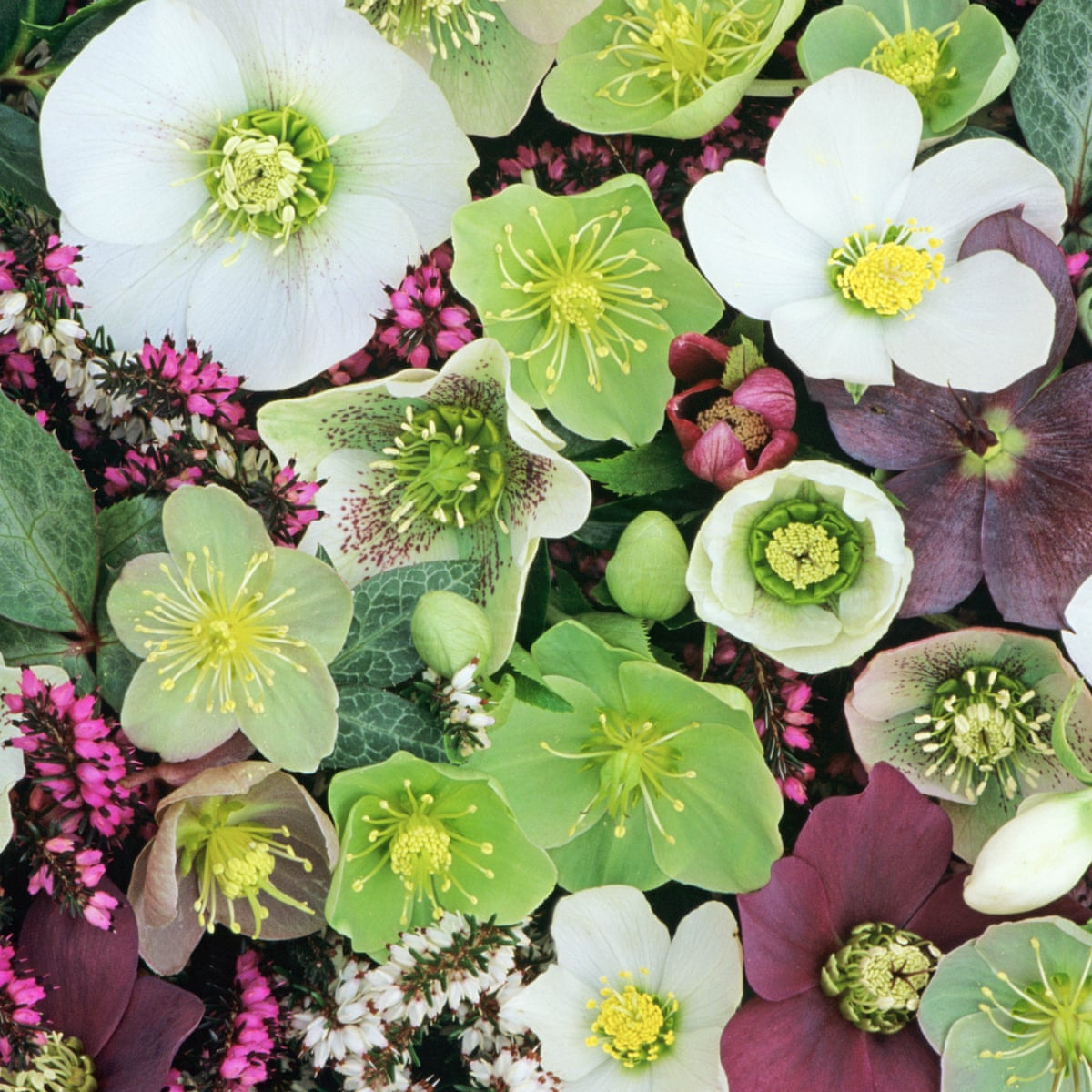 How To Plant Colourful Winter Window Boxes Gardening Advice The Guardian