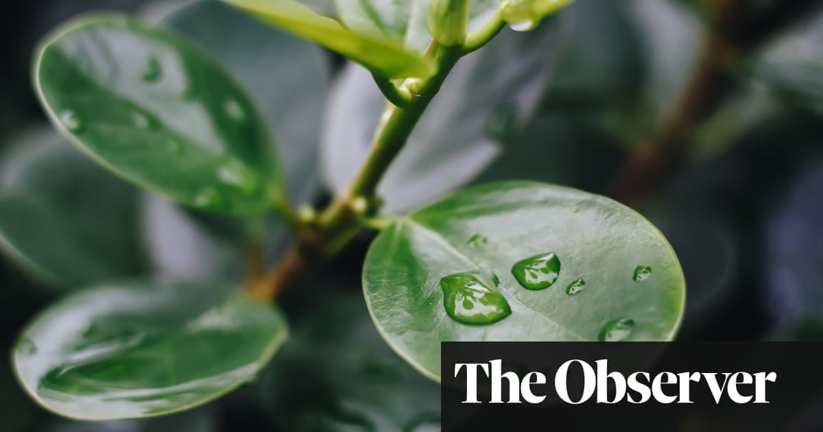 Why watering can make wilting worse
