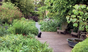 Capital asset: Dan's much-loved Peckham garden.