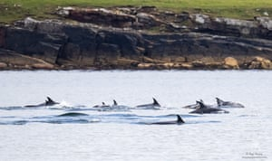 Orcas, white-sided dolphins (pictured), and minke whales are some of the many species which have been sighted in the last week during the Sea Watch Foundation's National Whale and Dolphin Watch event.
