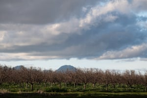 Orchards and farms surround Yuba City.