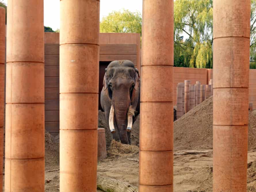 Overblown … Norman Foster's elephant enclosure in Copenhagen zoo.