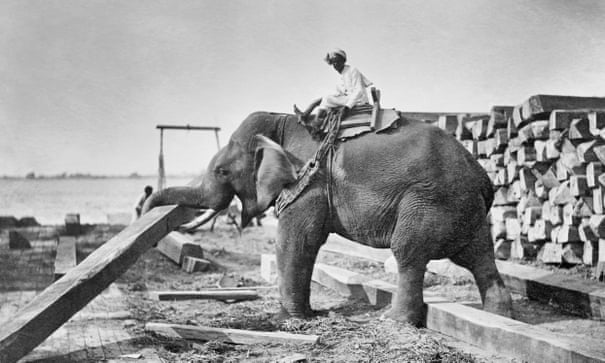 Did George Orwell shoot an elephant? His 1936 'confession' – and