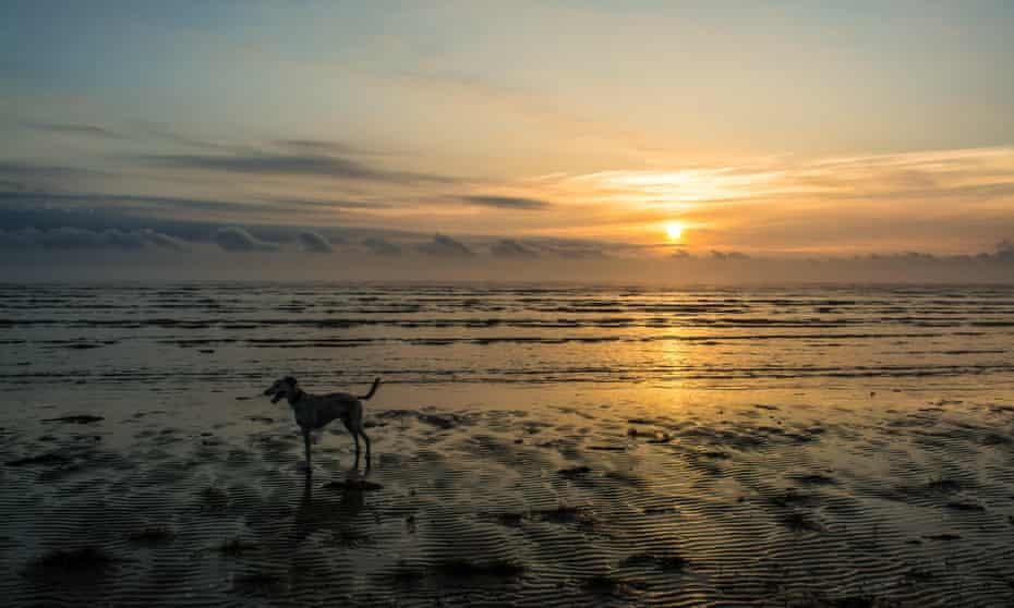 Dog on sunrise beach