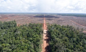 The boundary between intact forest and land already cleared for palm oil plantations in Indonesia.