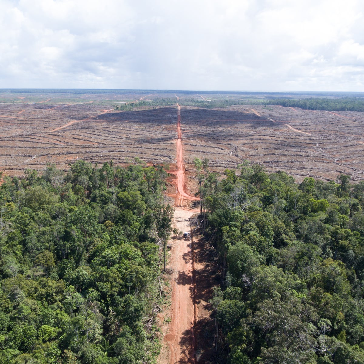 HSBC triggers investigation into palm oil company over deforestation  allegations   Guardian Sustainable Business   The Guardian