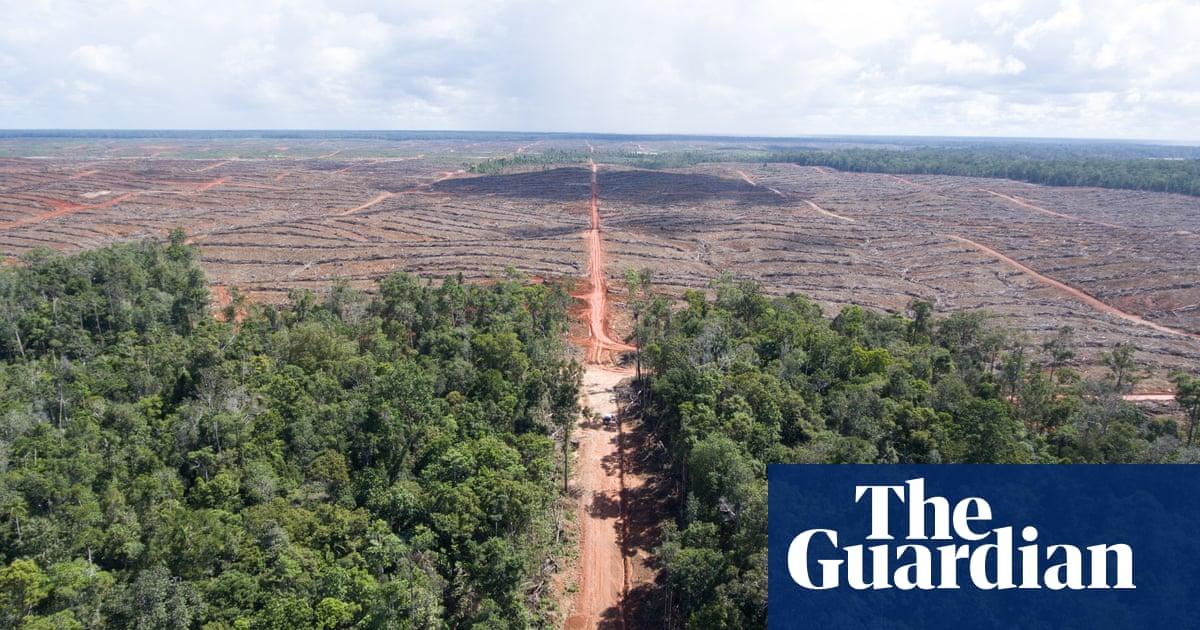 Hsbc Triggers Investigation Into Palm Oil Company Over