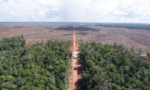 The boundary between intact forest and land cleared for palm oil in Papua.