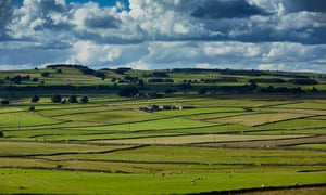 Peaky blinder … dry stone walls and fields in the Peak District, Derbyshire.