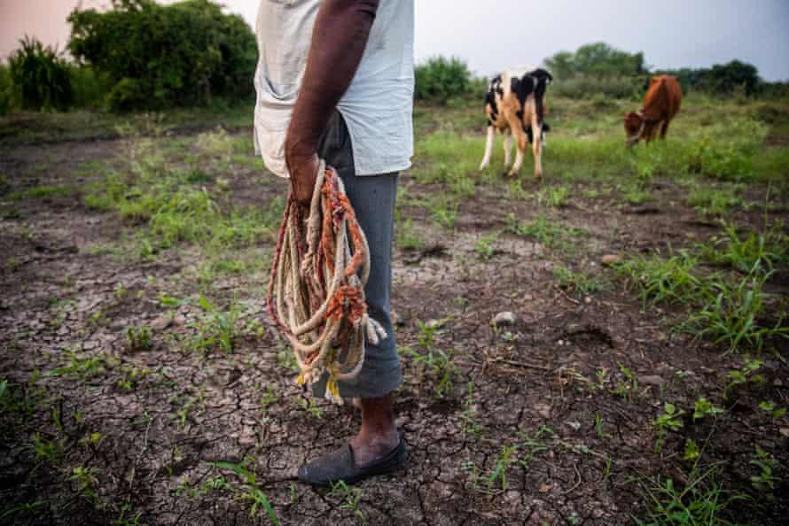 Lakshman Srirang Jadhav, 65, has two cows and one buffalo, Latur district, Maharashtra