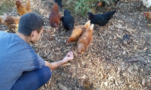 Grubbly Farms' initial business plan involves selling the dried larvae of black soldier flies as treats for chickens.