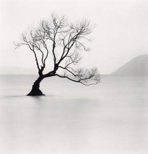 Wanaka Lake Tree, Study 1, Otago, New Zealand. 2013, by Michael Kenna